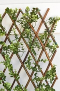 Where to rent BACKDROP, 6  x 8 LATTICE WILLOW W BOXWOOD in Lake Charles LA